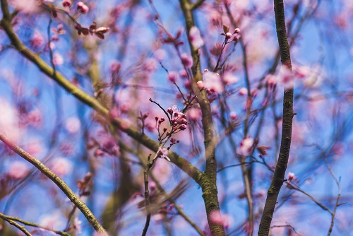 nature-flowers-summer-branches